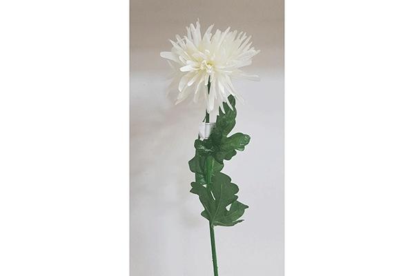 Cvet hrizantema bela 74 cm