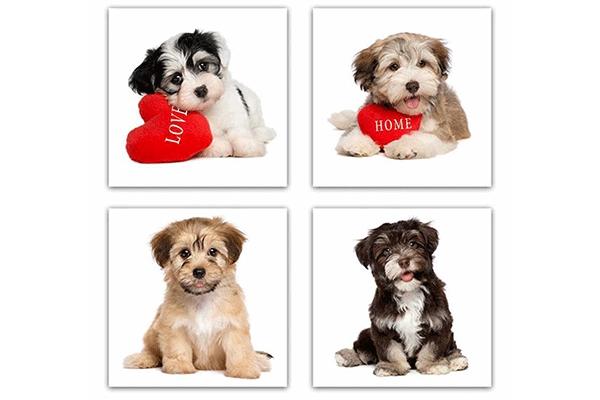 Slika puppy  28x1,5x28 4 modela