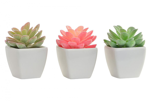 Ukrasni kaktus 6x6x8 3 boje