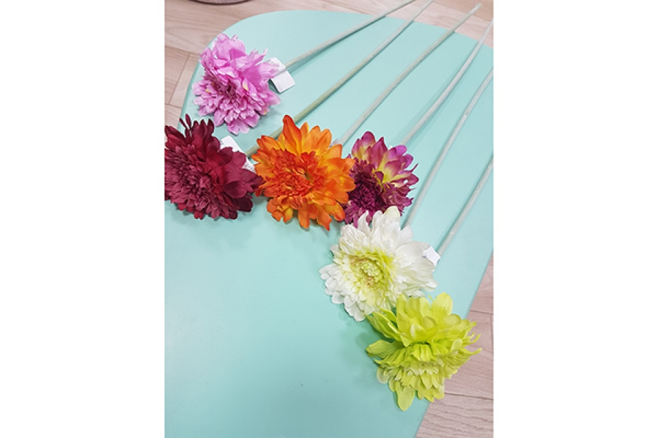 Cvet gerber 50 m 6 boja