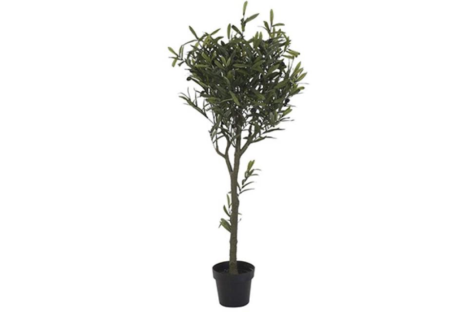 Dekorativna biljka olive tree / pp 50x142