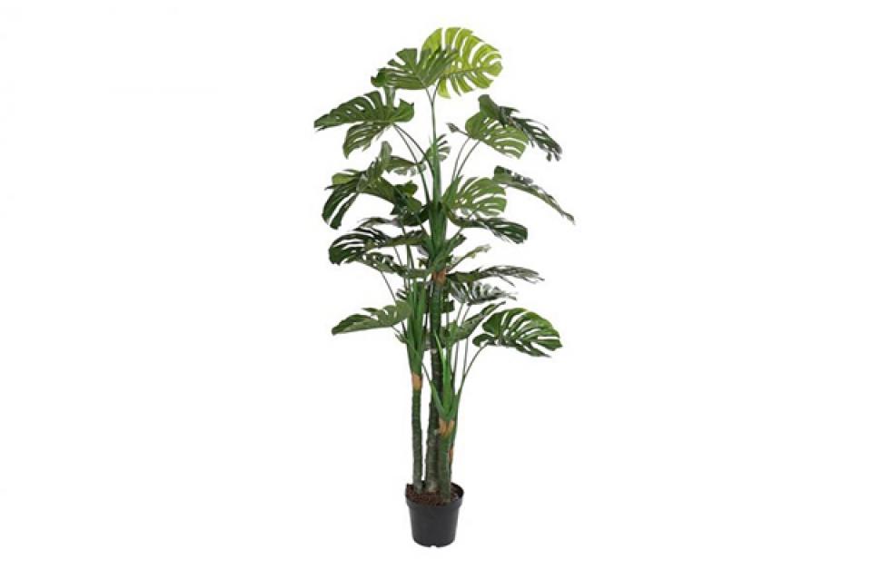 Dekorativna biljka u saksiji 90x90x200