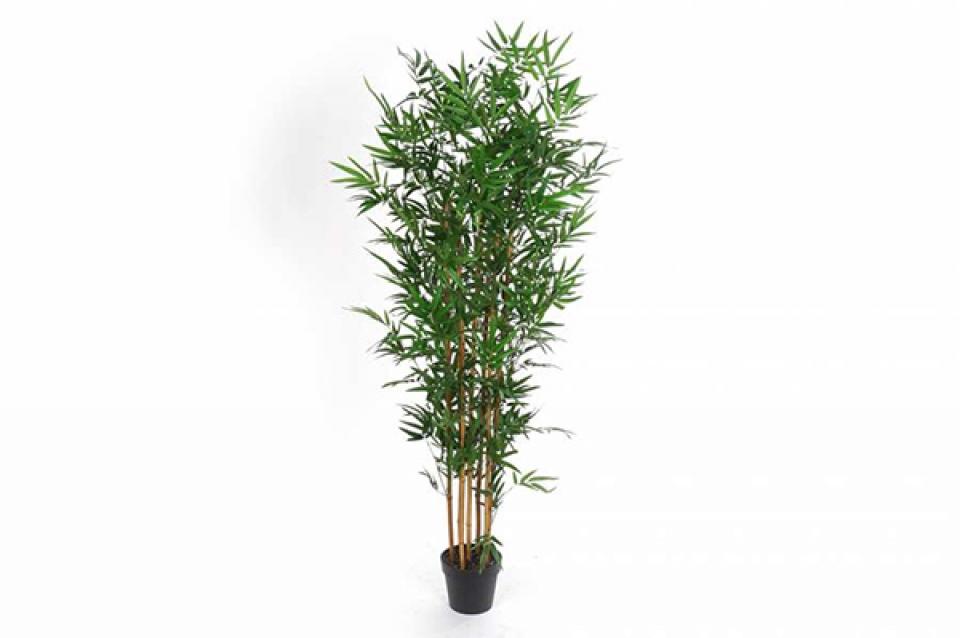 Dekorativni bambus 70x185