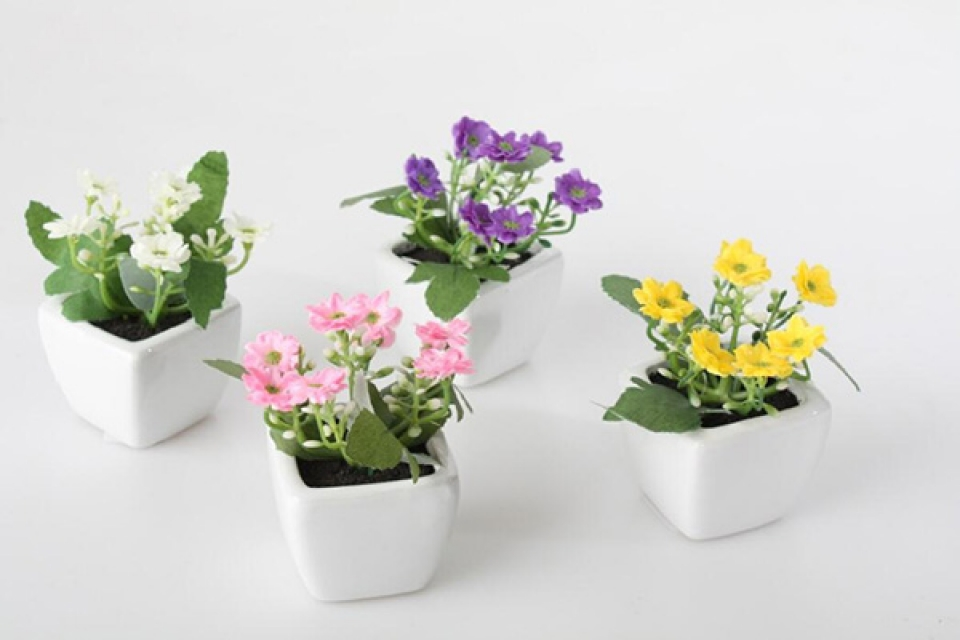 Male saksije sa ukrasnim cvetićima
