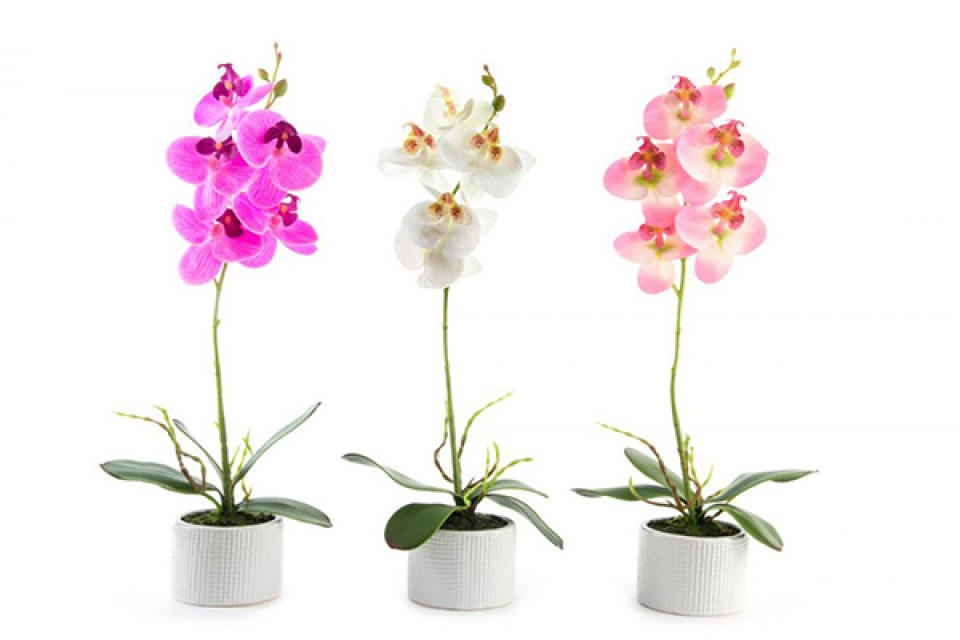 Orhideja 34 cm 3 modela