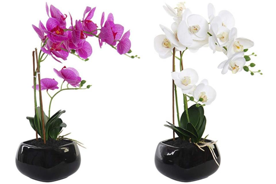 Orhideja u crnoj saksiji 30x20x48 2 modela