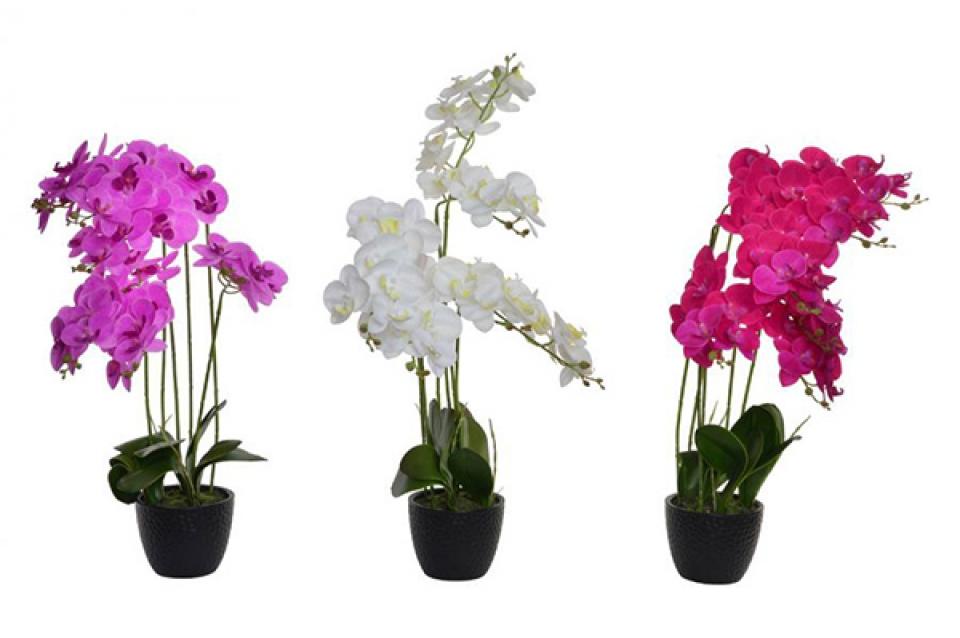 Orhideja u saksiji 15x70 3 modela