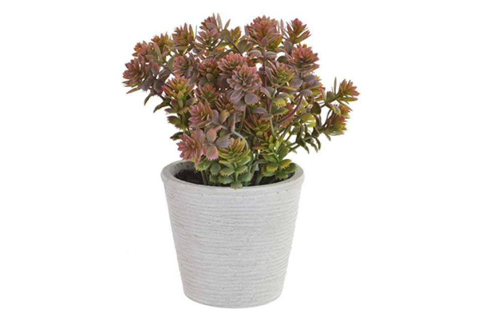 Ukrasna biljka 8x18