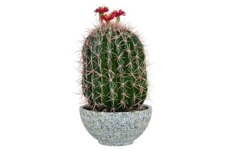 Ukrasni kaktus 19x19x40