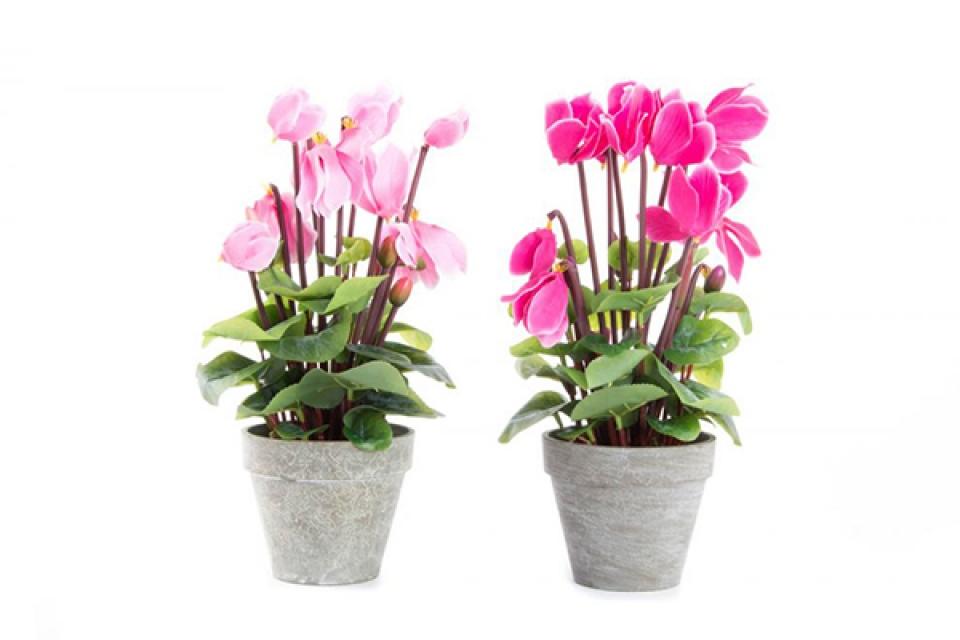 Ukrasno cveće 12x37 2 boje